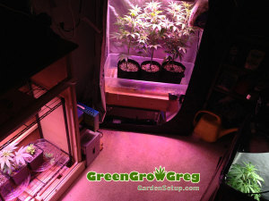 Marijuana-Indoor-Garden-Walkin-Closet